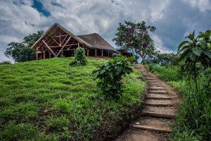 Visit Virunga Park, DR Congo