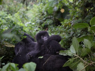 Virunga National Park in Democratic Republic of Congo