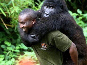 Support Virunga this Holiday Season!