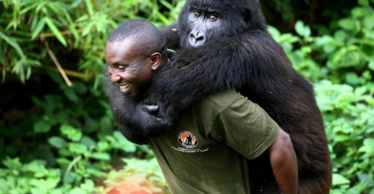 Support Virunga this Holiday Season!
